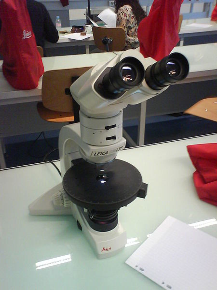 A light microscope, such as this one in a modern laboratory, can be used to see individual cells in living organisms.