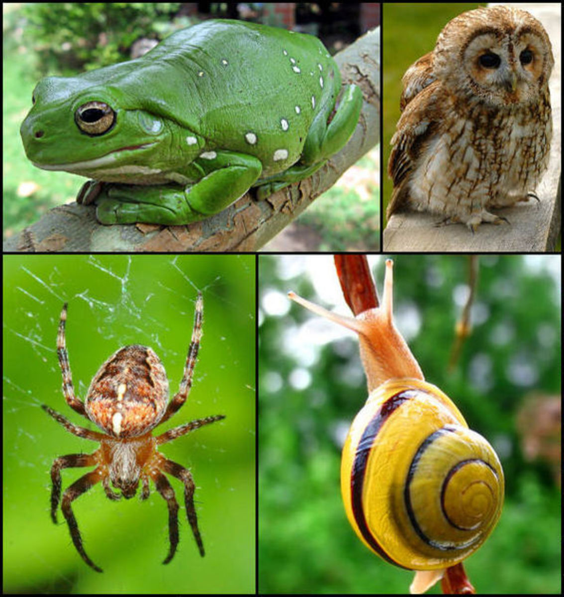 Animal life has evolved an enormous array of different forms.