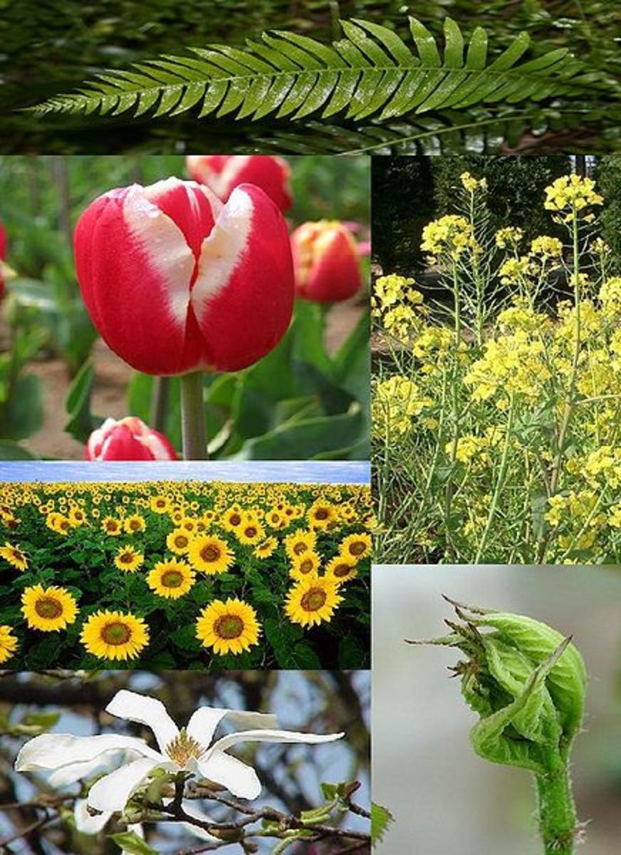 Plants have evolved a stunning array of different forms.