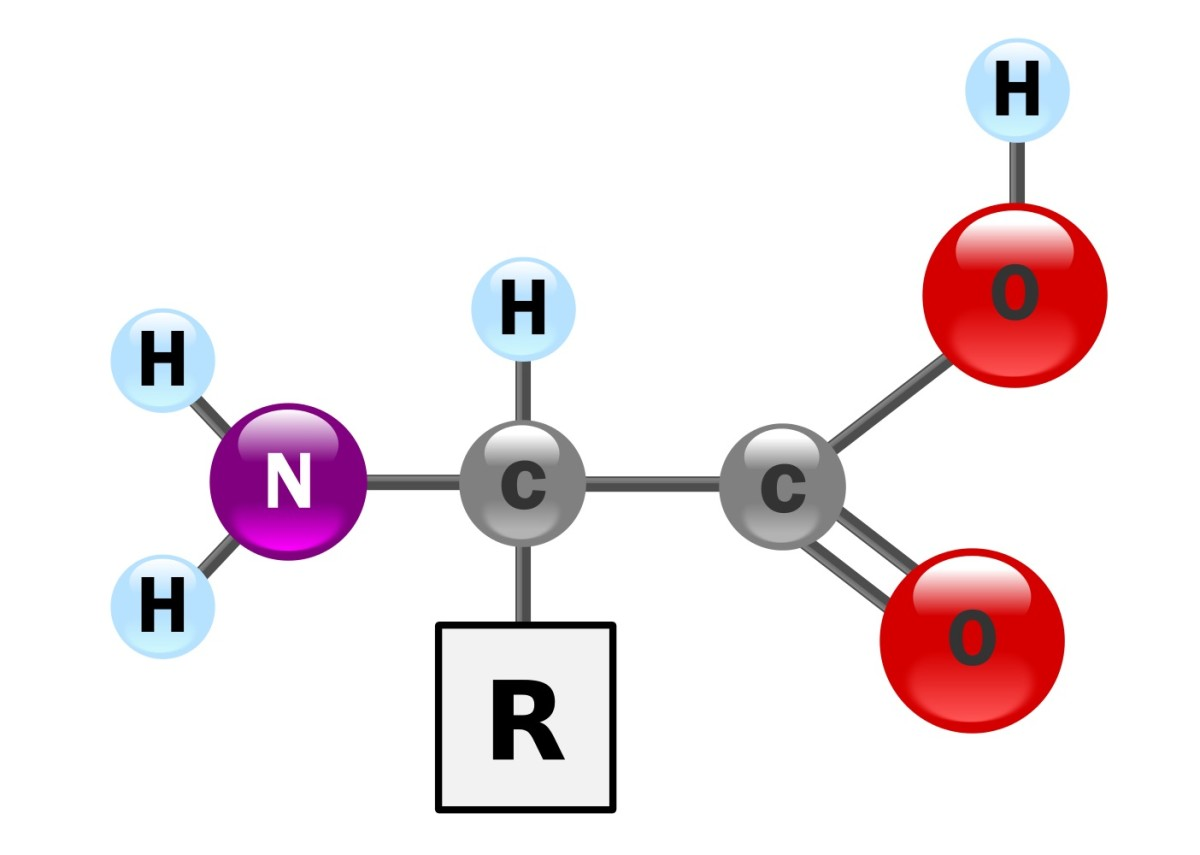 This is a ball and stick diagram of an amino acid molecule. The R group is different in each type of amino acid.