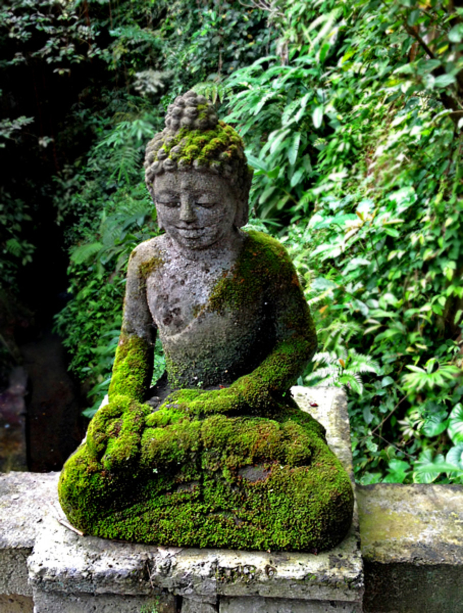 Above: A serene Buddha statue overlooking the garden.