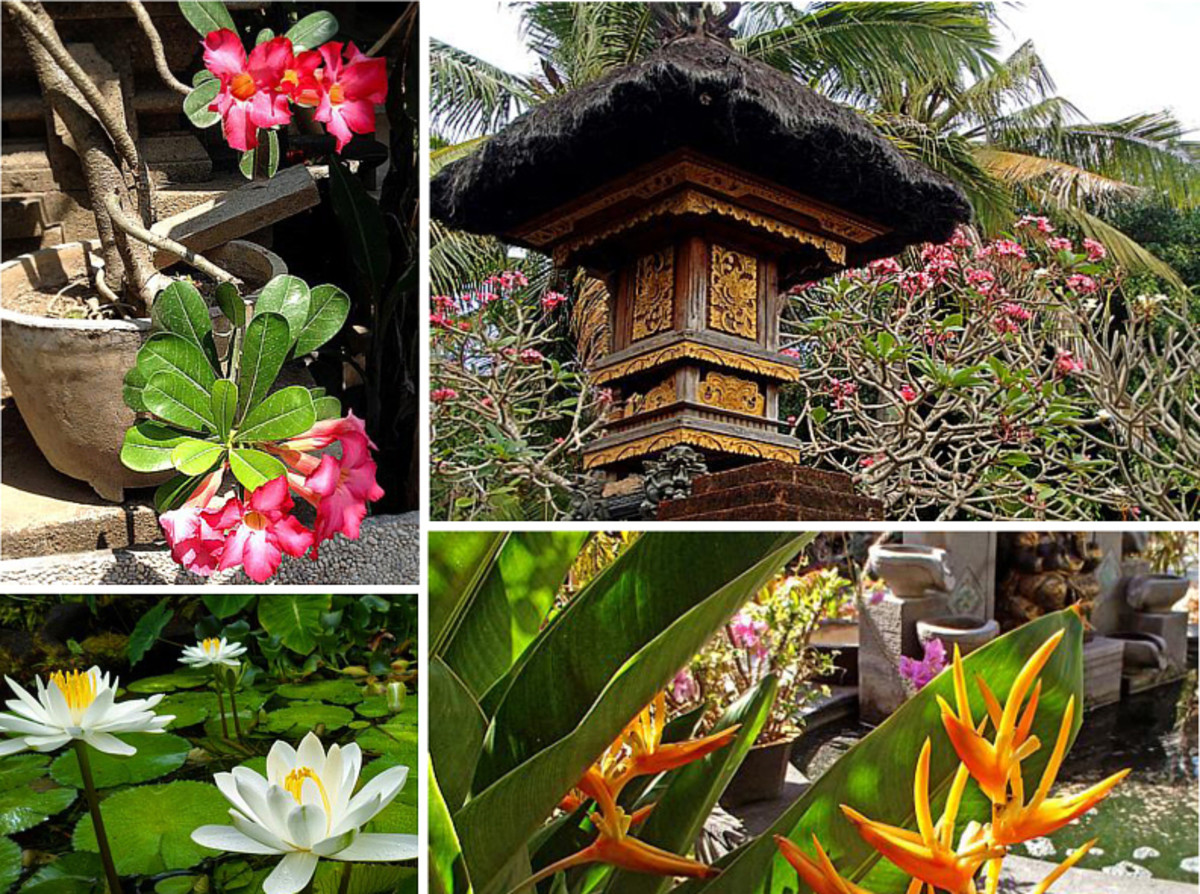 Above: A profusion of tropical flowers and exotic foliage can be seen in every Balinese garden.
