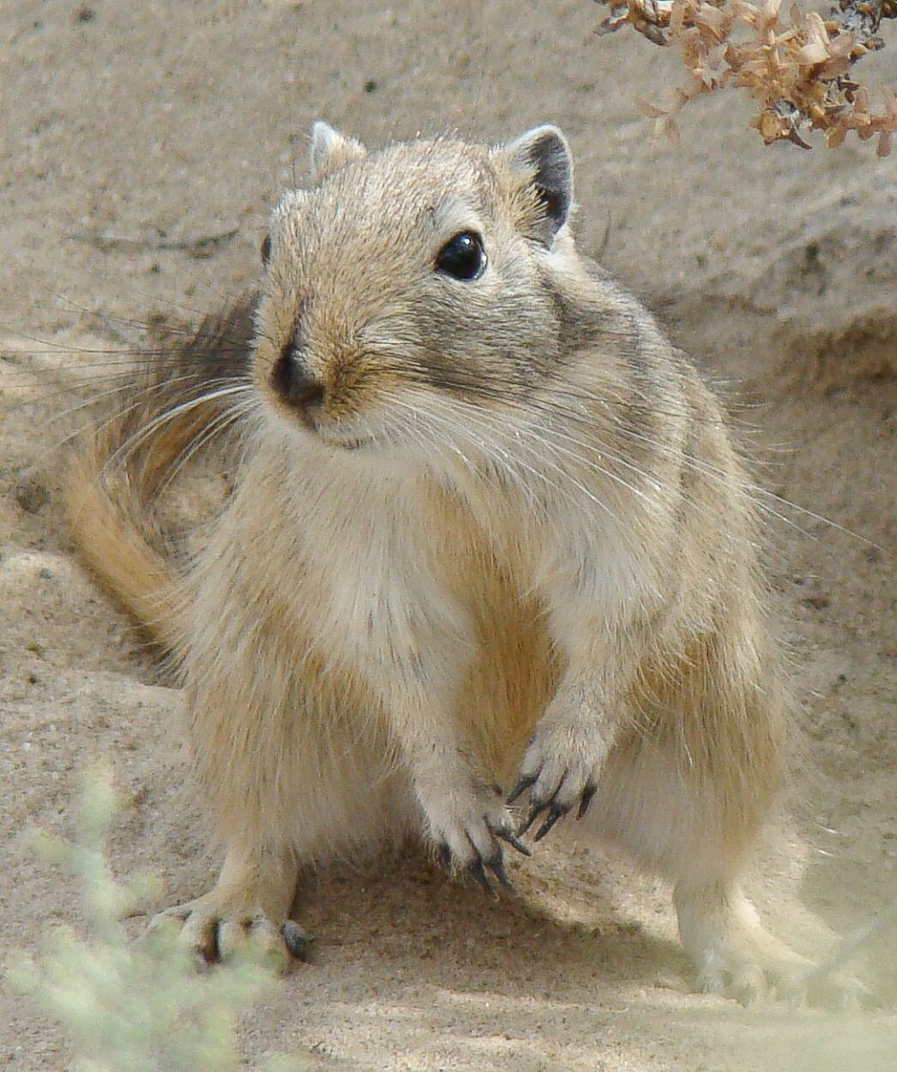 Did the giant gerbil contribute to the Black Death?
