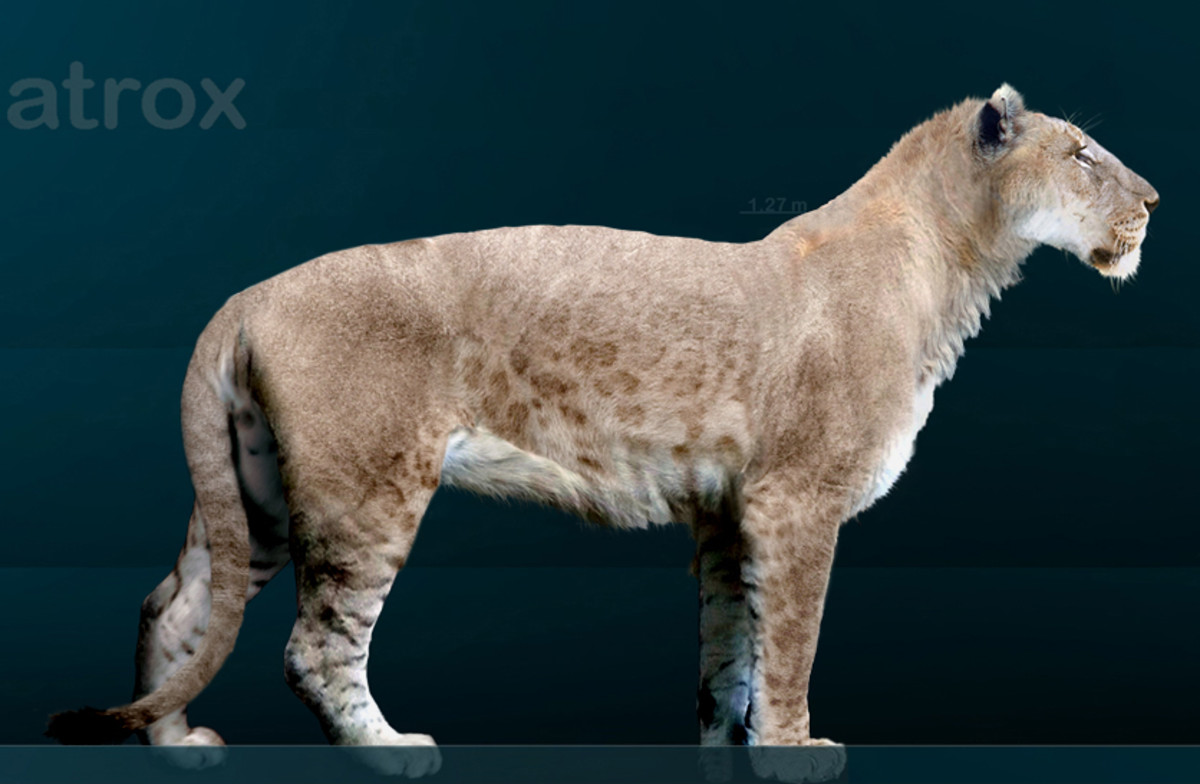 The American lion was a formidable feline.