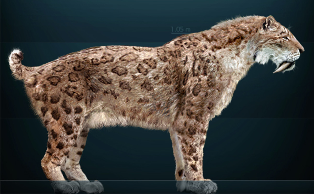 Smilodon fatalis is the iconic North American ice-age big cat.