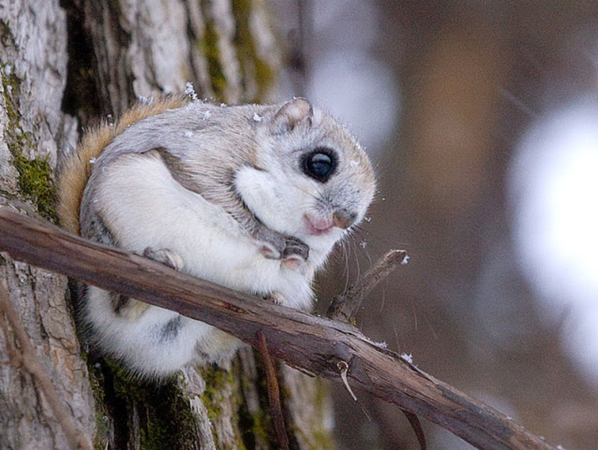 top-ten-cutest-japanese-wild-animals