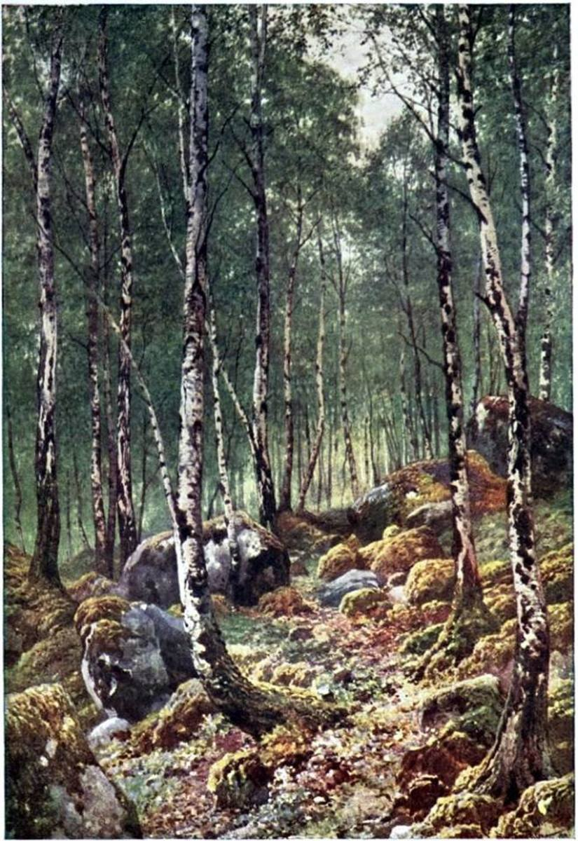 Birchwood forest, an illustration by Sutton Palmer, 1904.