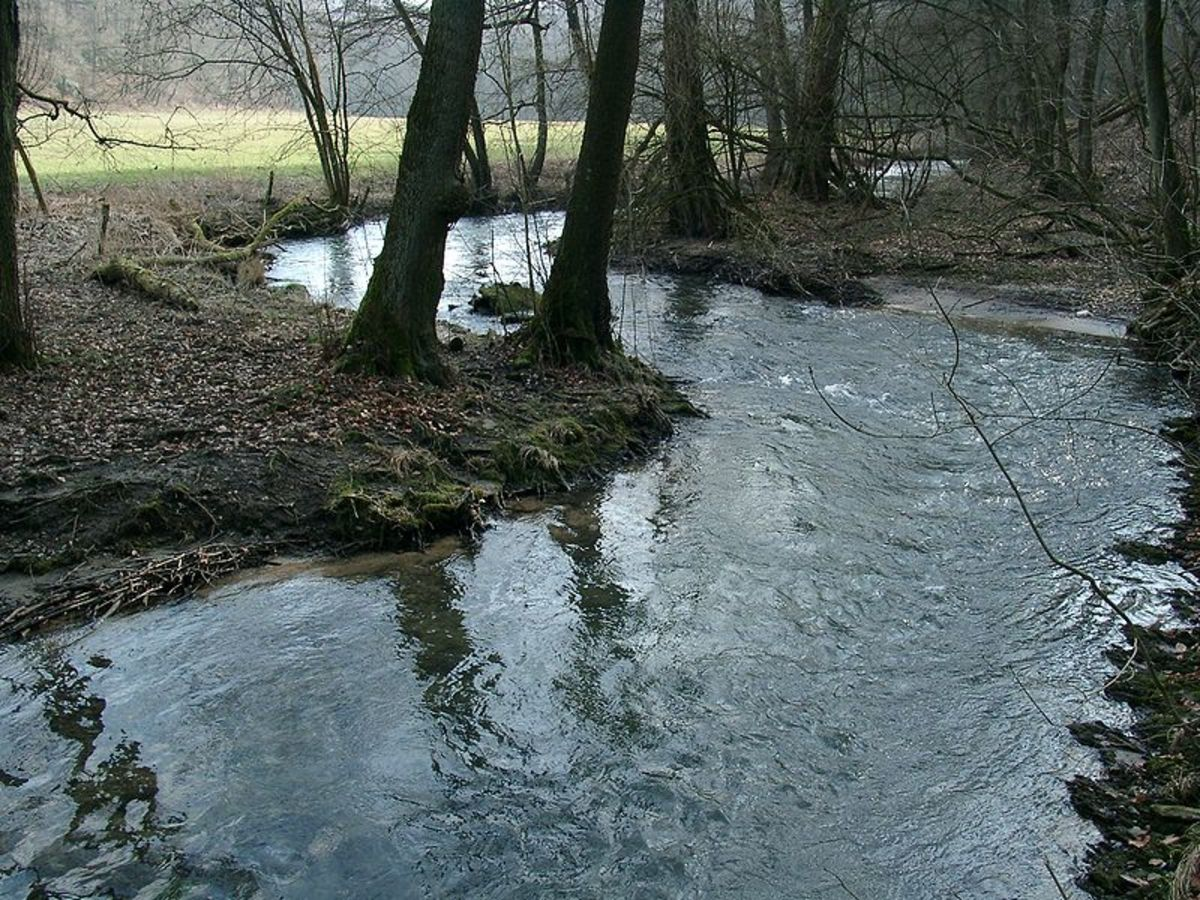 Creekside, in Germany's Neandertal Valley.  Photo by Cordula, courtesy Wikimedia Commons.