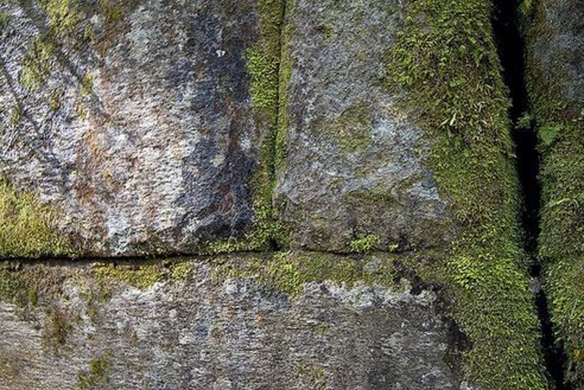kaimanawa-wall-ancient-wall-from-lost-cvilization-or-natural-formation
