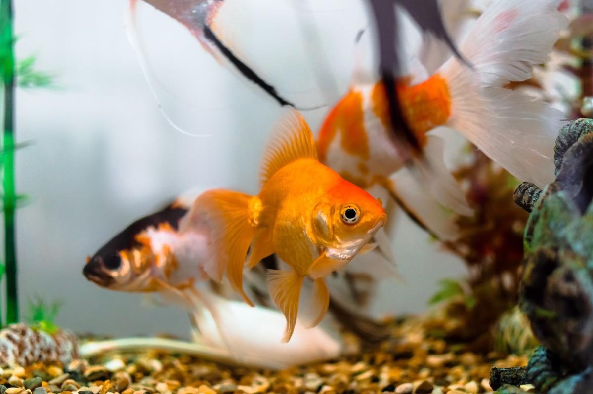 Aquarium algaecide convicted Stella Nickell.