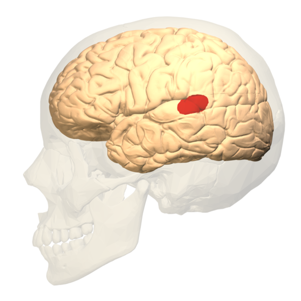 Wernicke's area is located where the parietal lobe joins the temporal lobe.