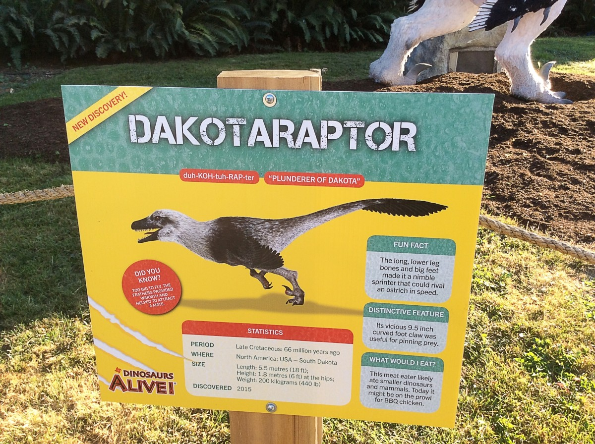 The Dakotaraptor model is more heavyset than the version shown on the identification sign. An explanation for this disparity would have been useful for the public.