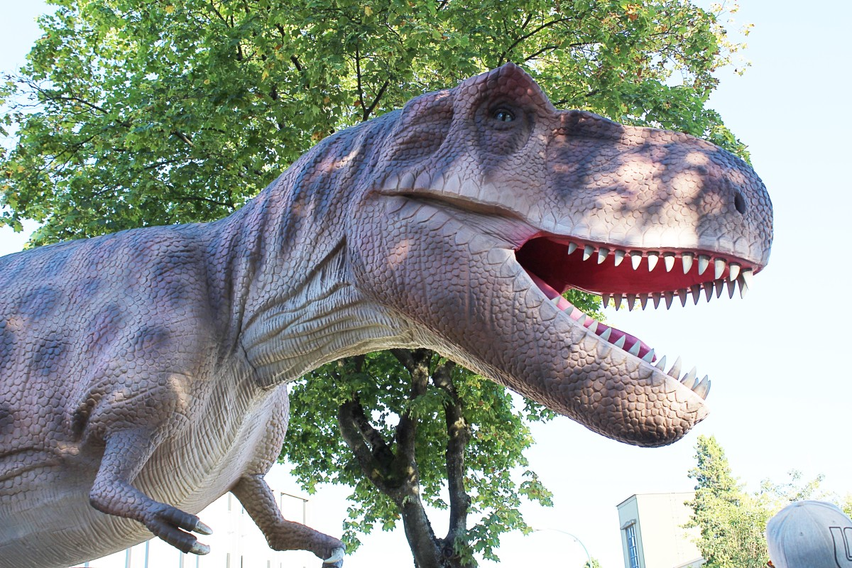 A close-up view of the face of the T. rex at the PNE