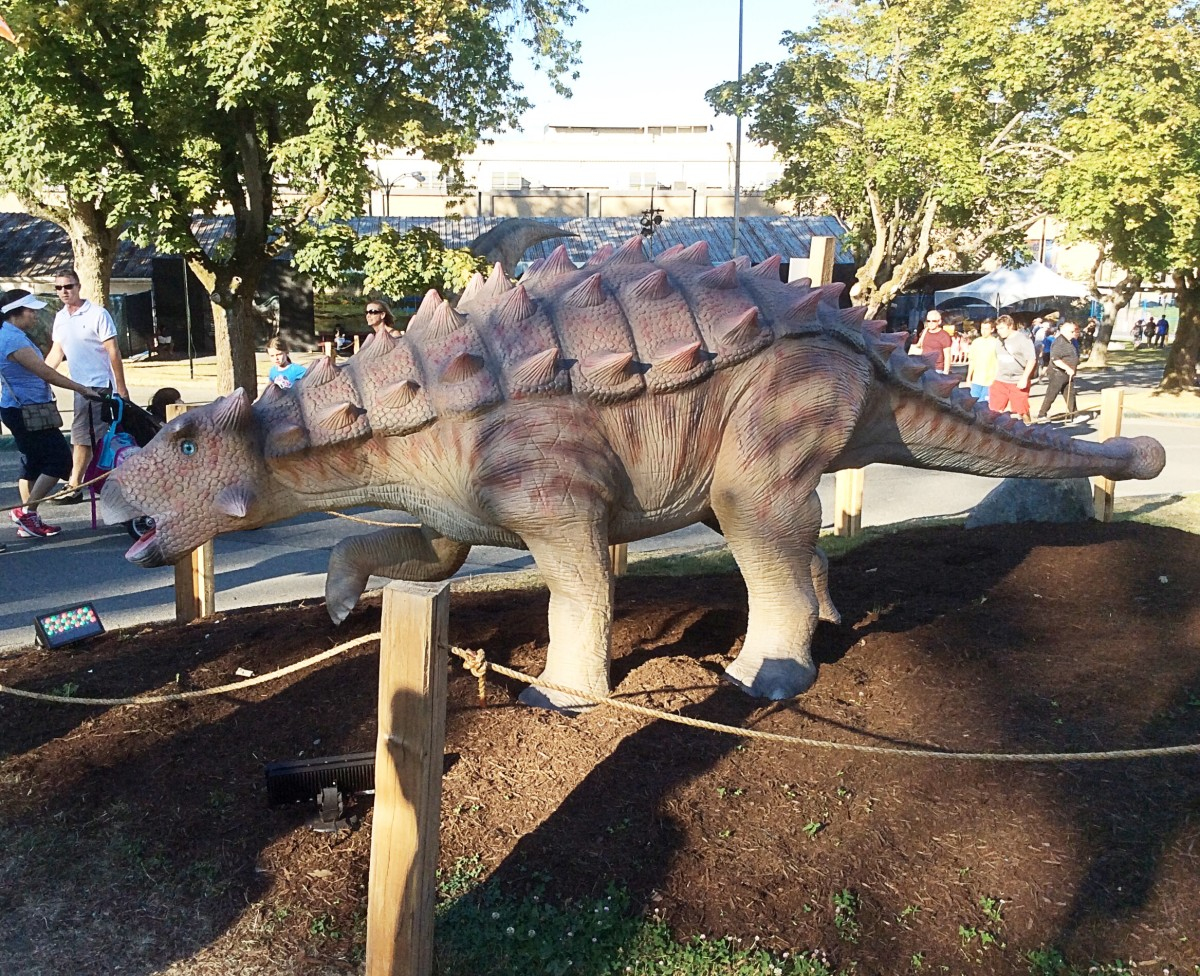 A view of Pinacosaurus that shows its tail club