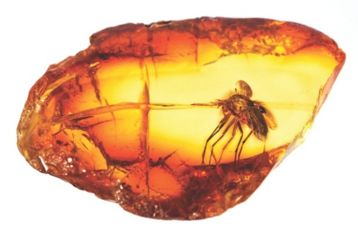 Amber forms from very old sap that hardens over time.