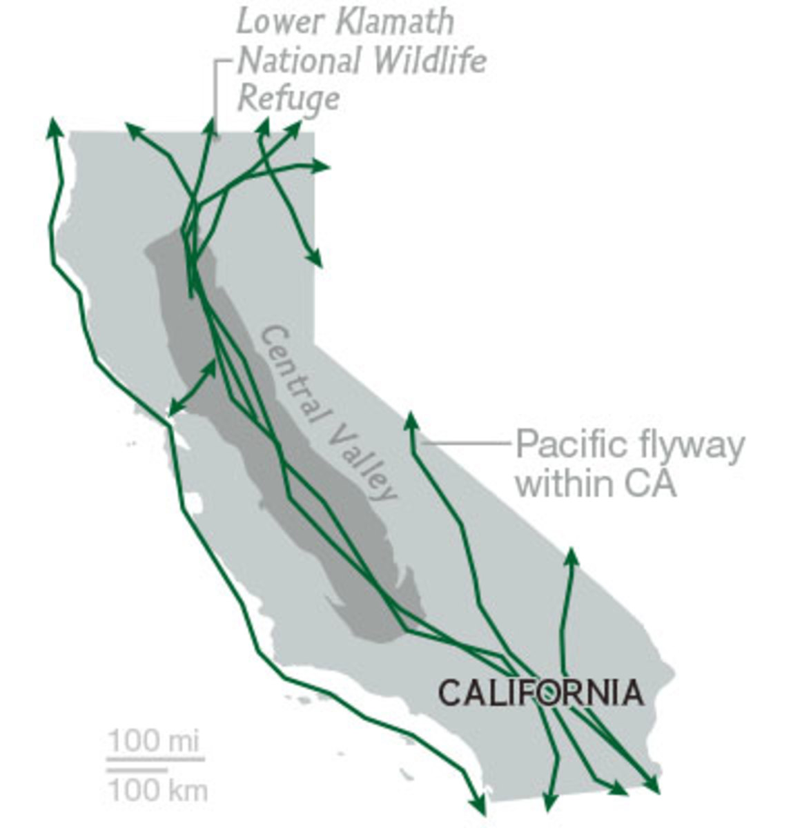 California, part of the Pacific Flyway