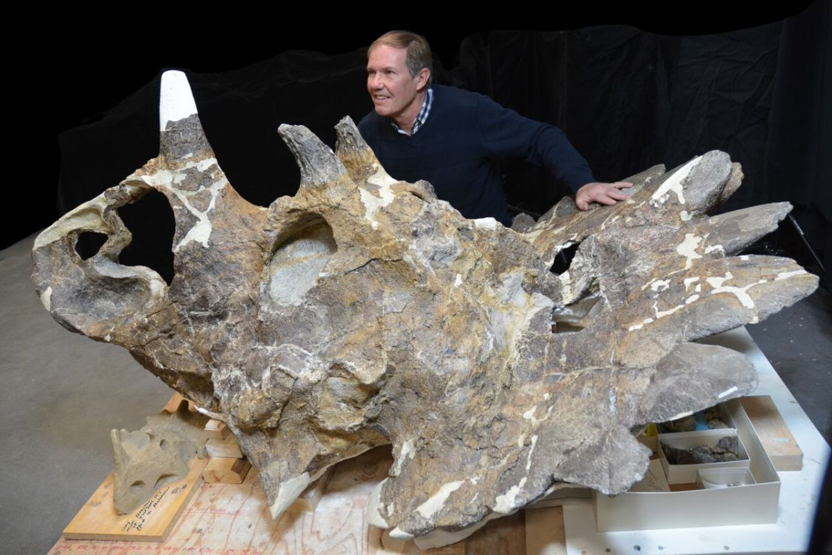Regaliceratops skull with its discoverer, paleontologist Peter Hews.