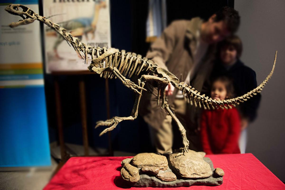 Chilesaurus skeleton at the Museo Argentino de Ciencias Naturales in Buenos Aires.