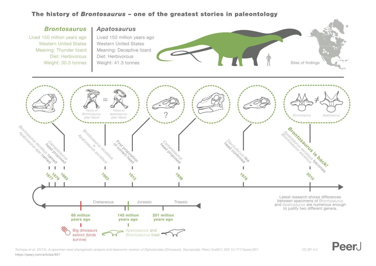 A history and comparison of Brontosaurus (in green) with Apatosaurus (in gray), by StudioAM and CC BY 4.0 from PeerJ.