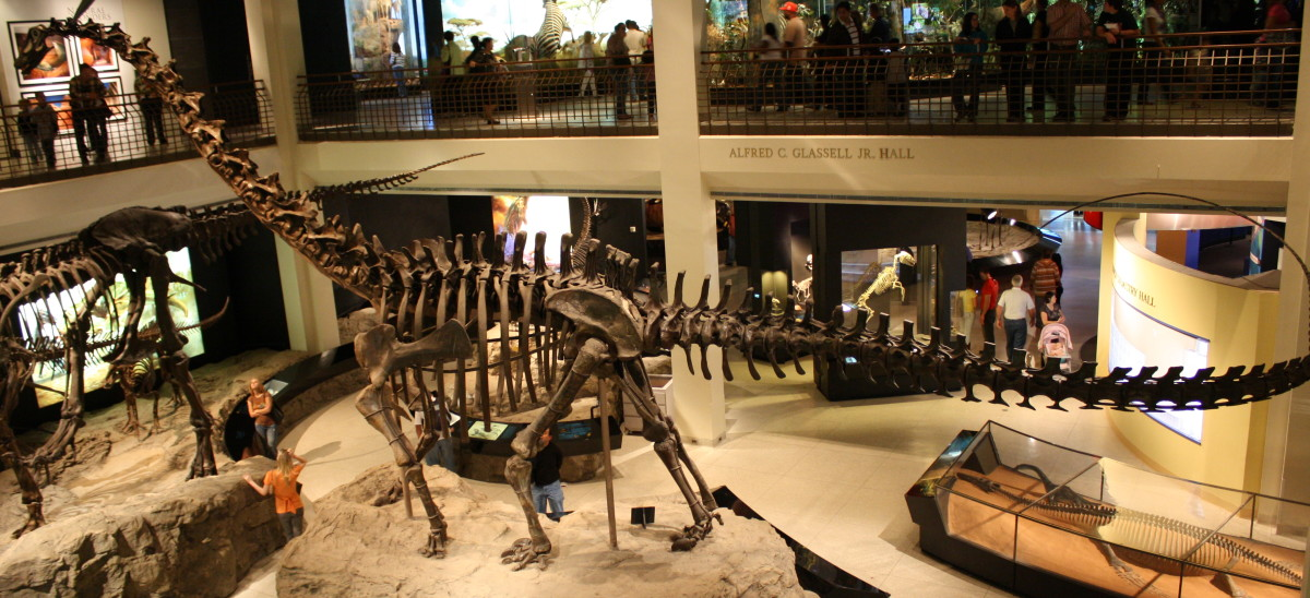 Galeamopus skeleton at the Houston Museum of Natural Science.