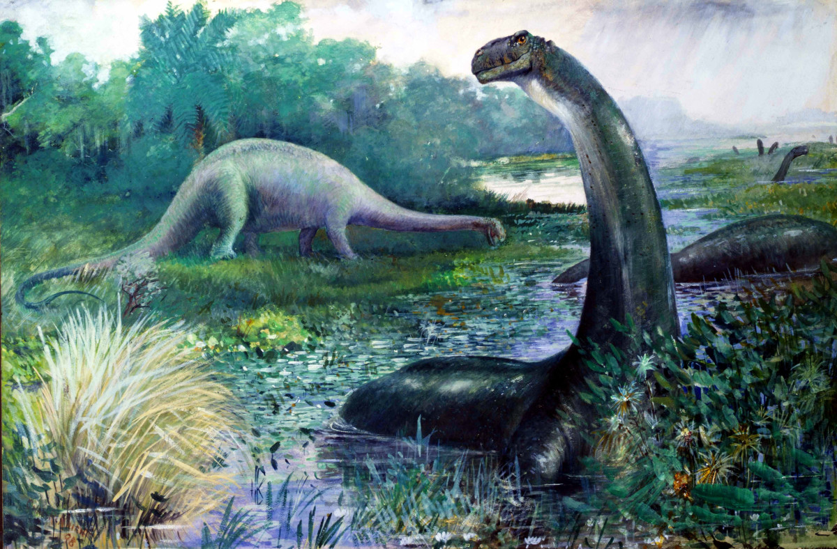 1897 painting of Brontosaurus by Charles Knight. The dinosaur's short, blunt head, its tail dragging on the ground, and its semi-aquatic lifestyle have since been proven to be inaccurate.