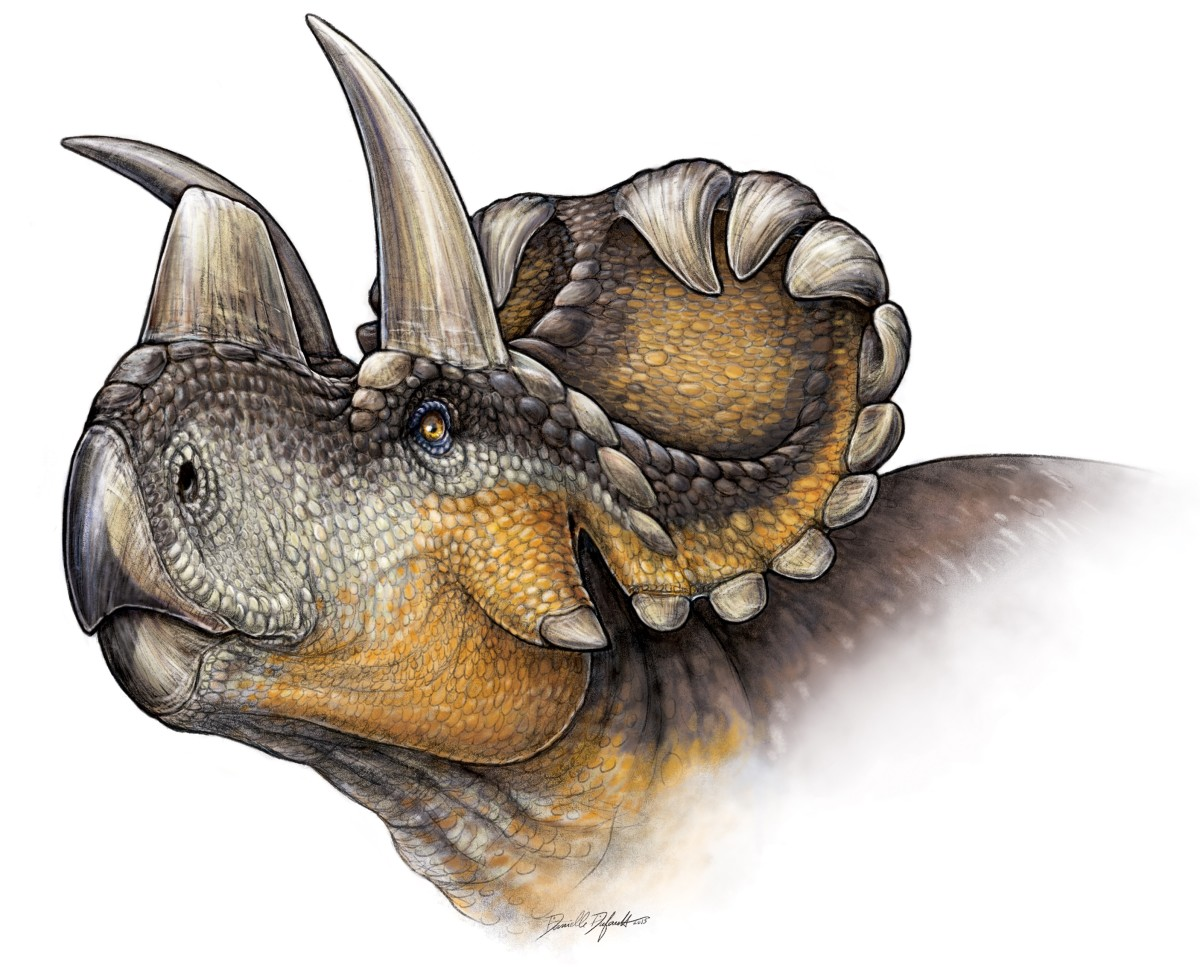 Wendiceratops by Danielle Dufault.