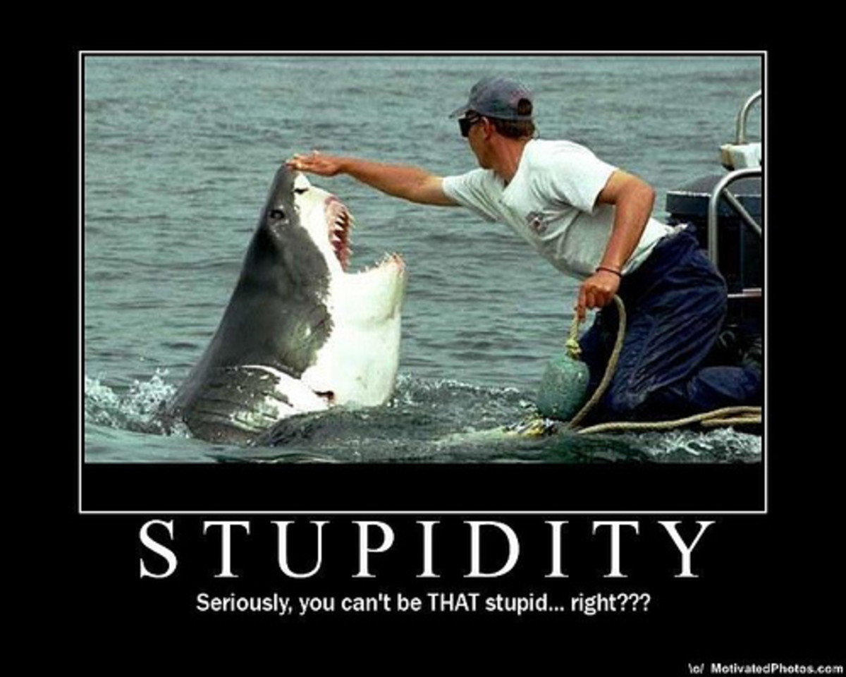 the-world-of-stupidity