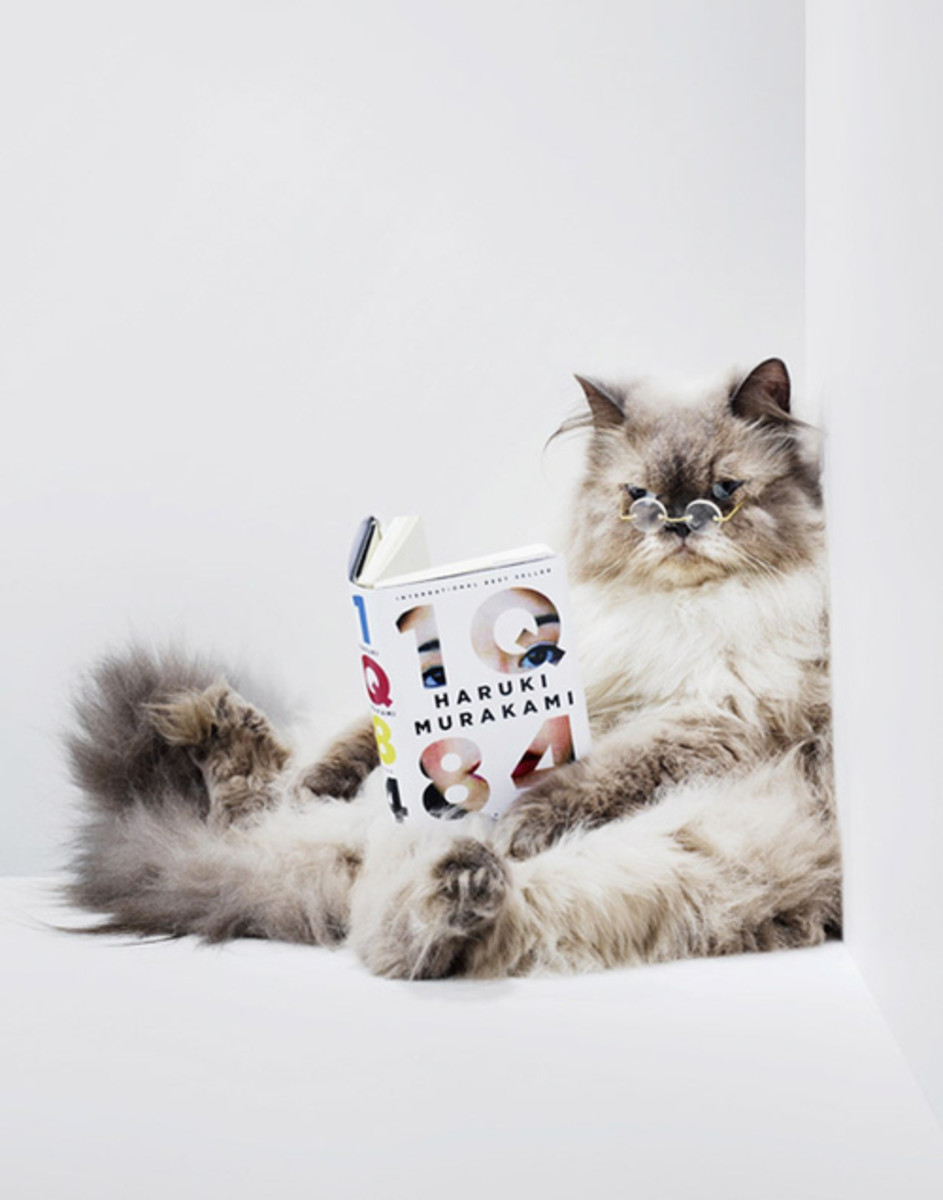 If Murakami's cats can talk, why not read?