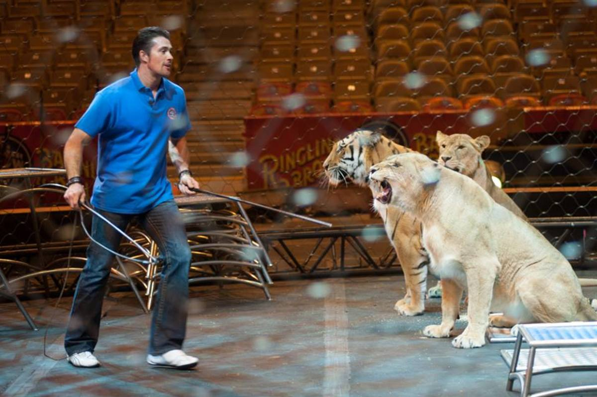When teaching the class,  Alexander Lacey holds two guiders that help him to communicate with the big cats.