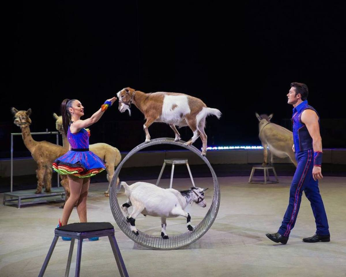Mixed animal act with Katie and Alexander Lacey: Ringling Bros. and Barnum & Bailey presents Out of This World. (2016-2017)