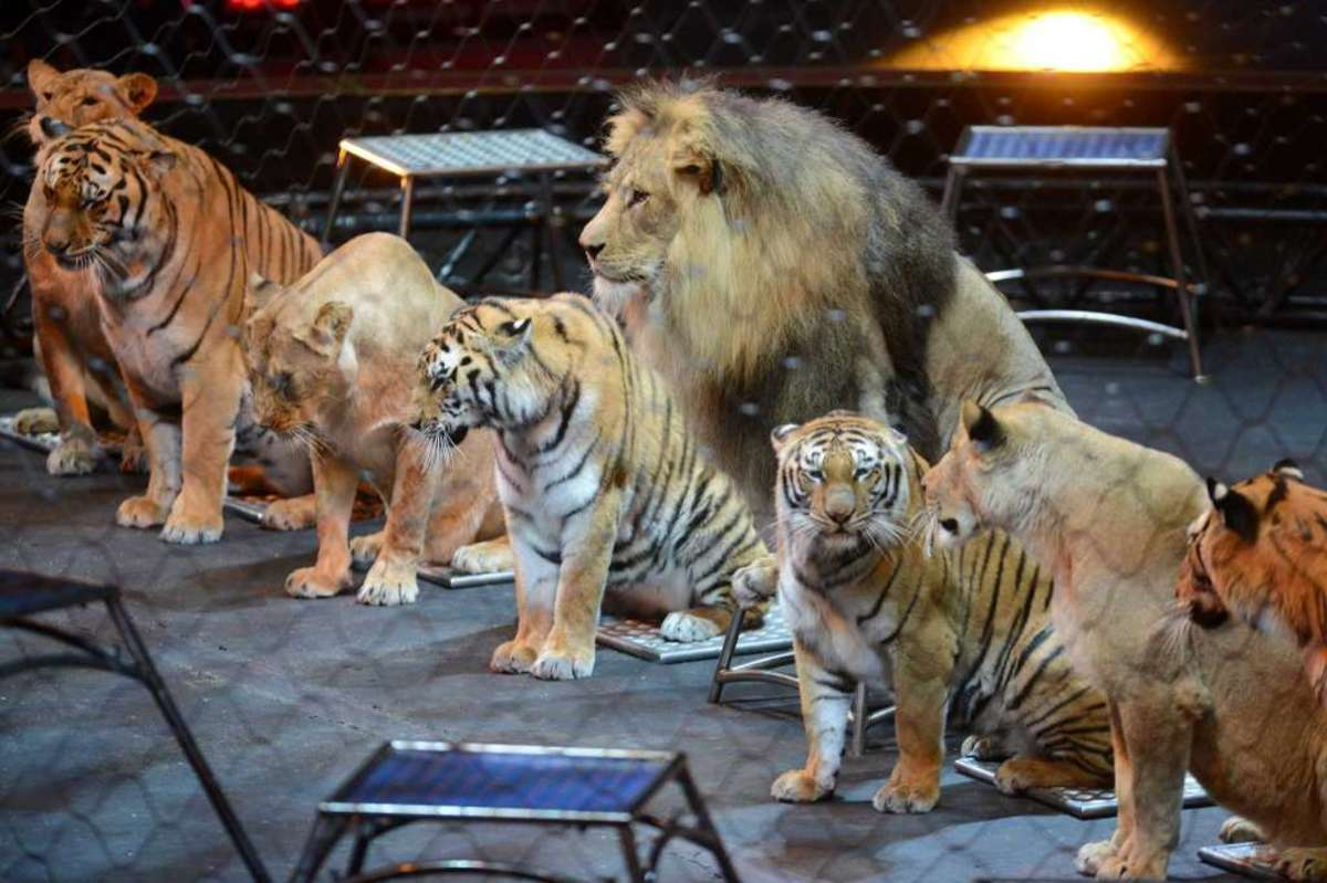 Lions and tigers, oh my!