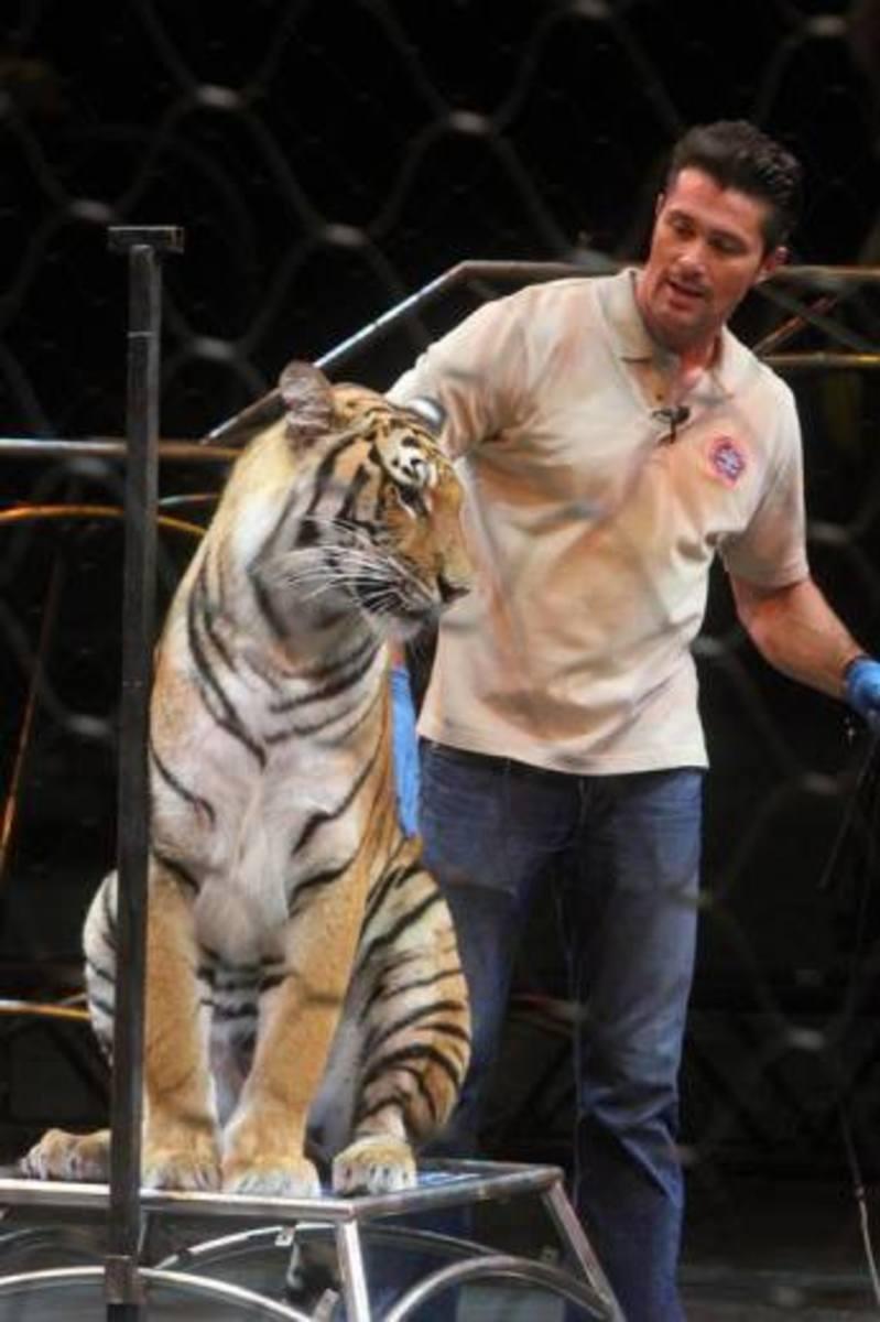Sit, tiger, sit