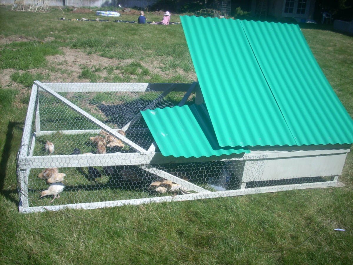This is the layer coop.  Both corrugated plastic flaps lift to access chickens and harvest eggs.