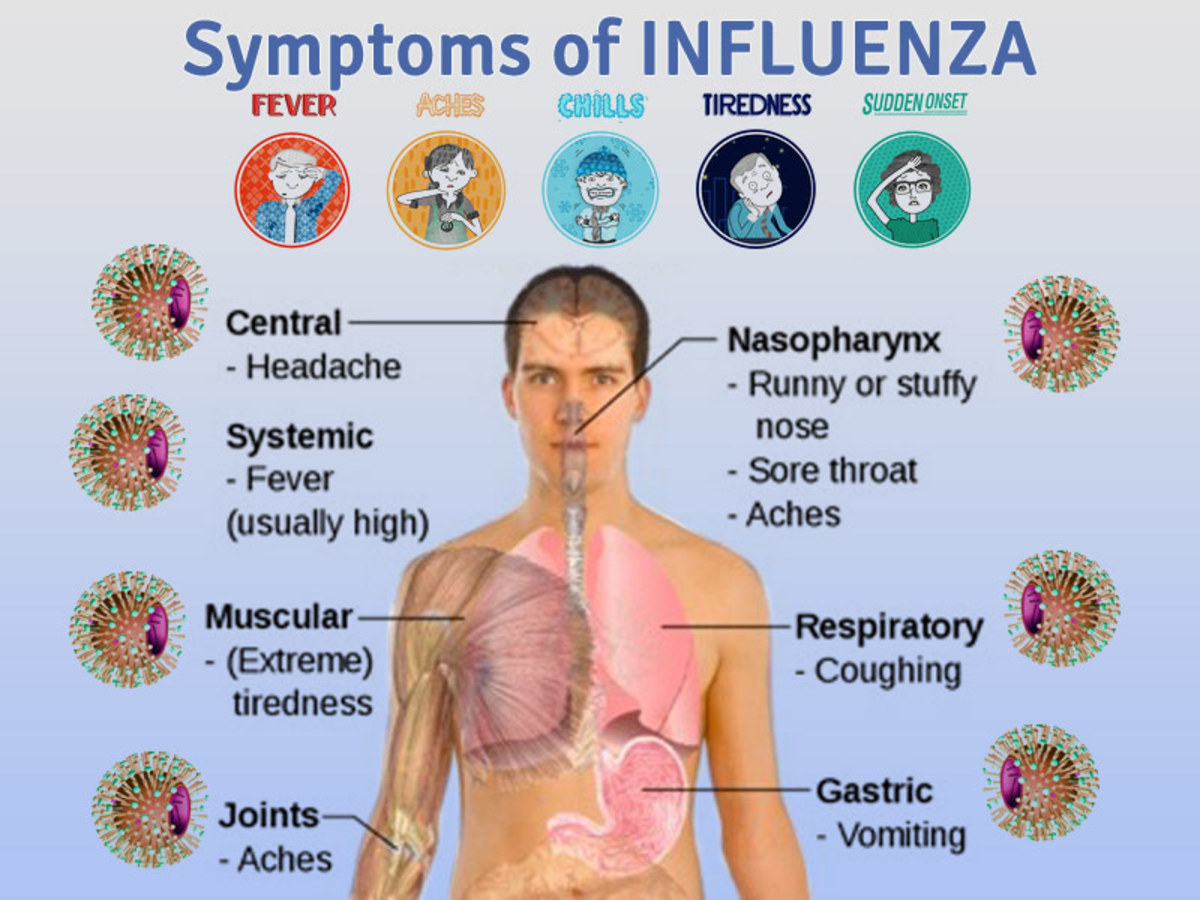 The Epidemiology of Influenza | Owlcation