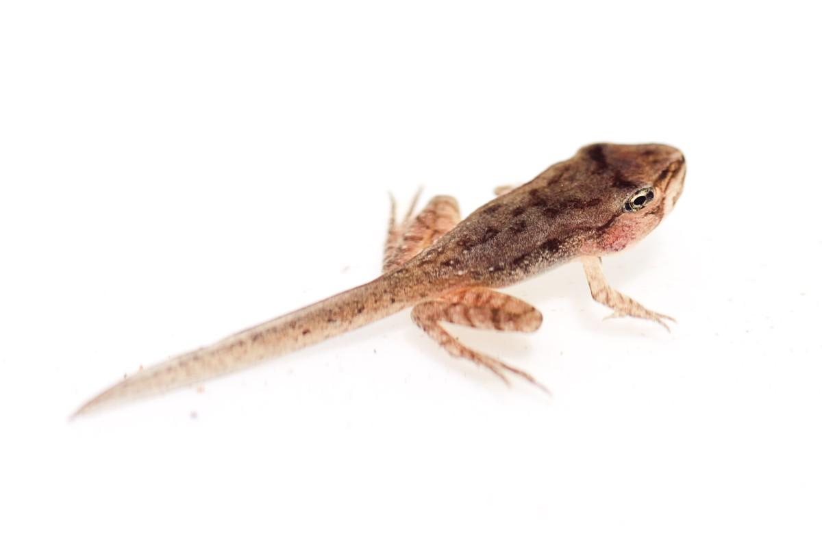 A more mature tadpole