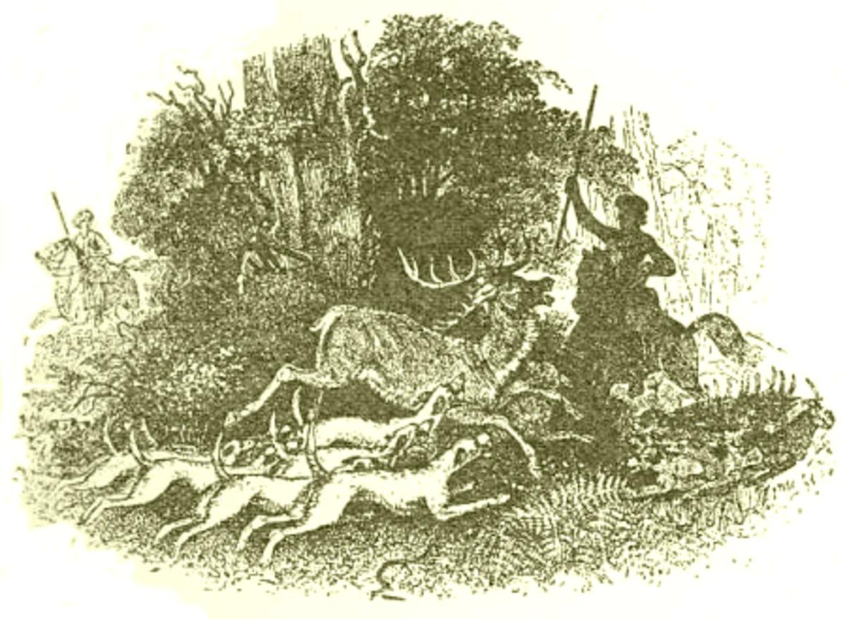 Pwyll Hunting