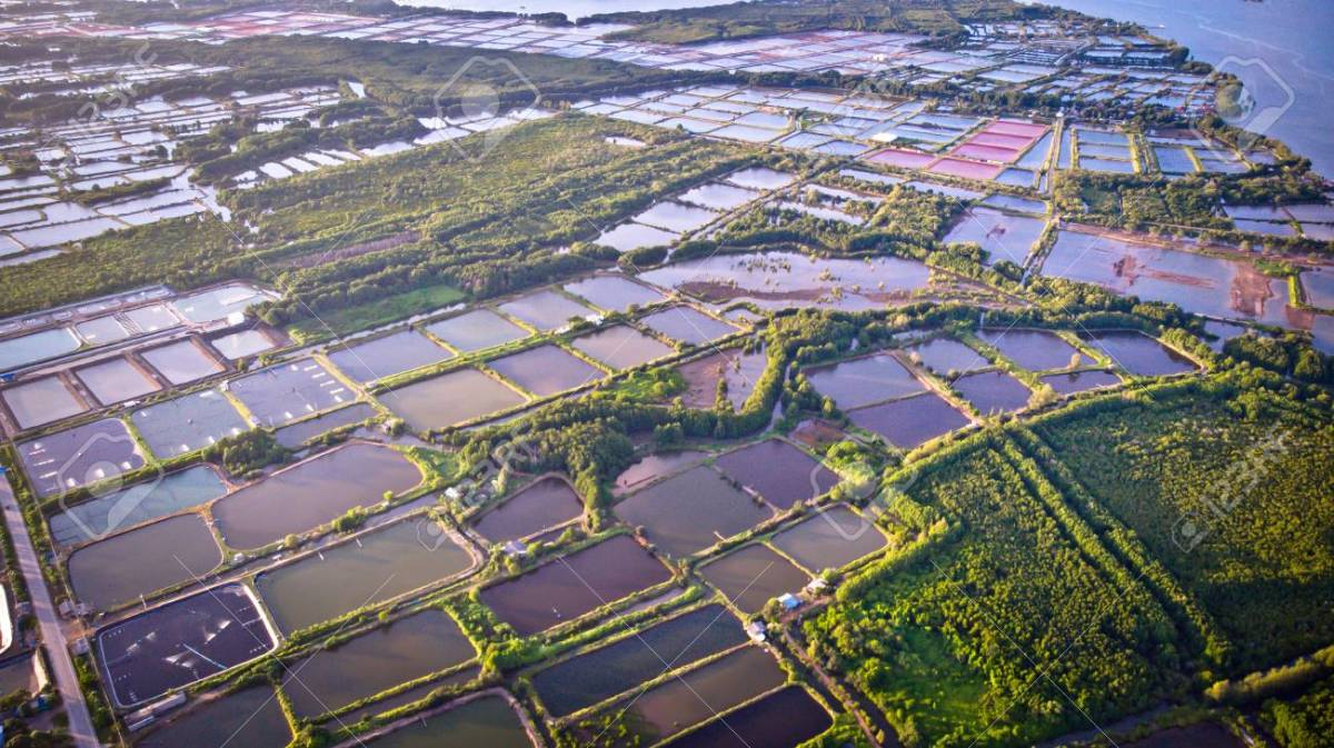 Shrimp farms in Thailand.