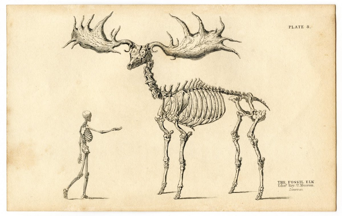 Schelch: Ancient Deer Remembered in the Nibelungenlied