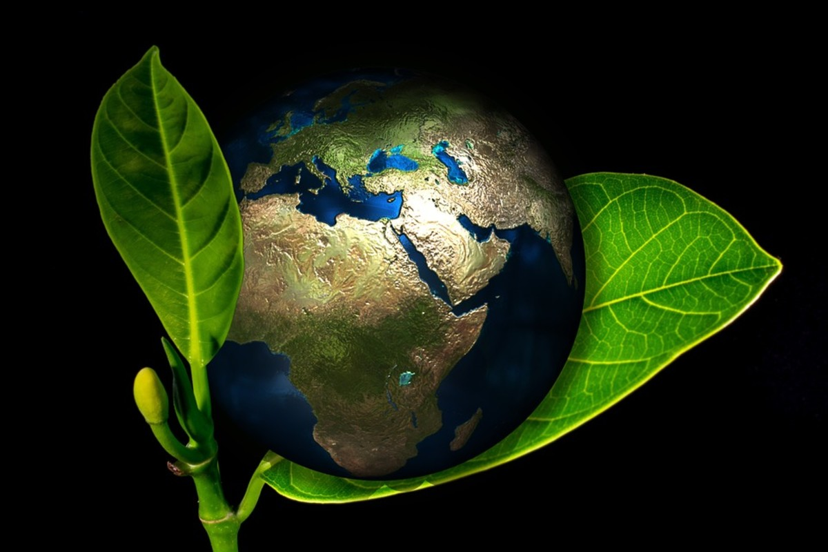 Save the Earth | Conservationist | Environmentalist