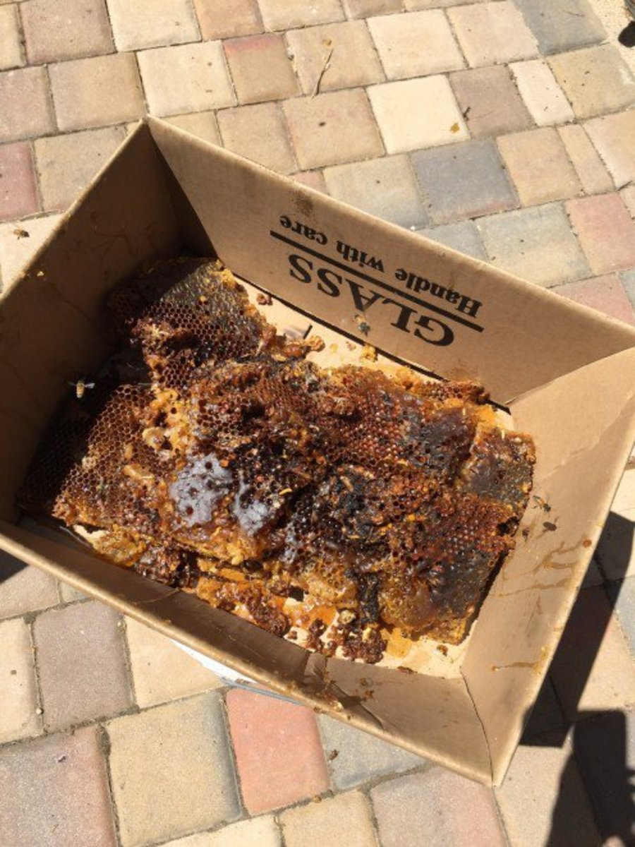 beekeepers-beware-of-wax-moths