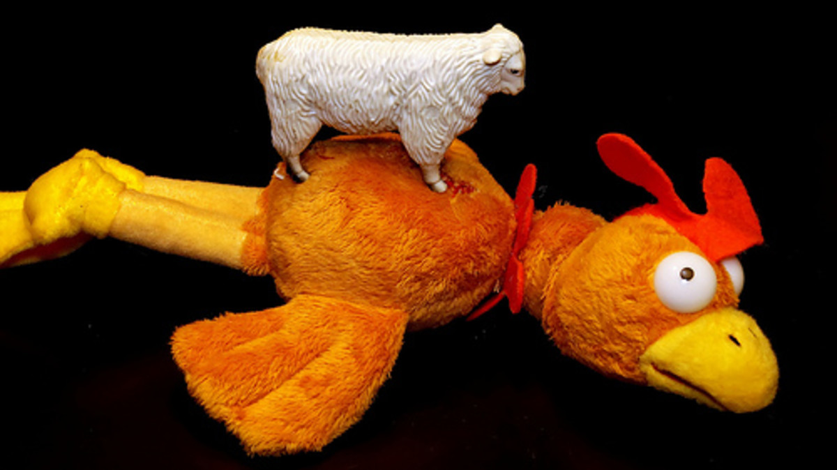 """Or was it """"Sheep's got a chicken to ride?"""""""