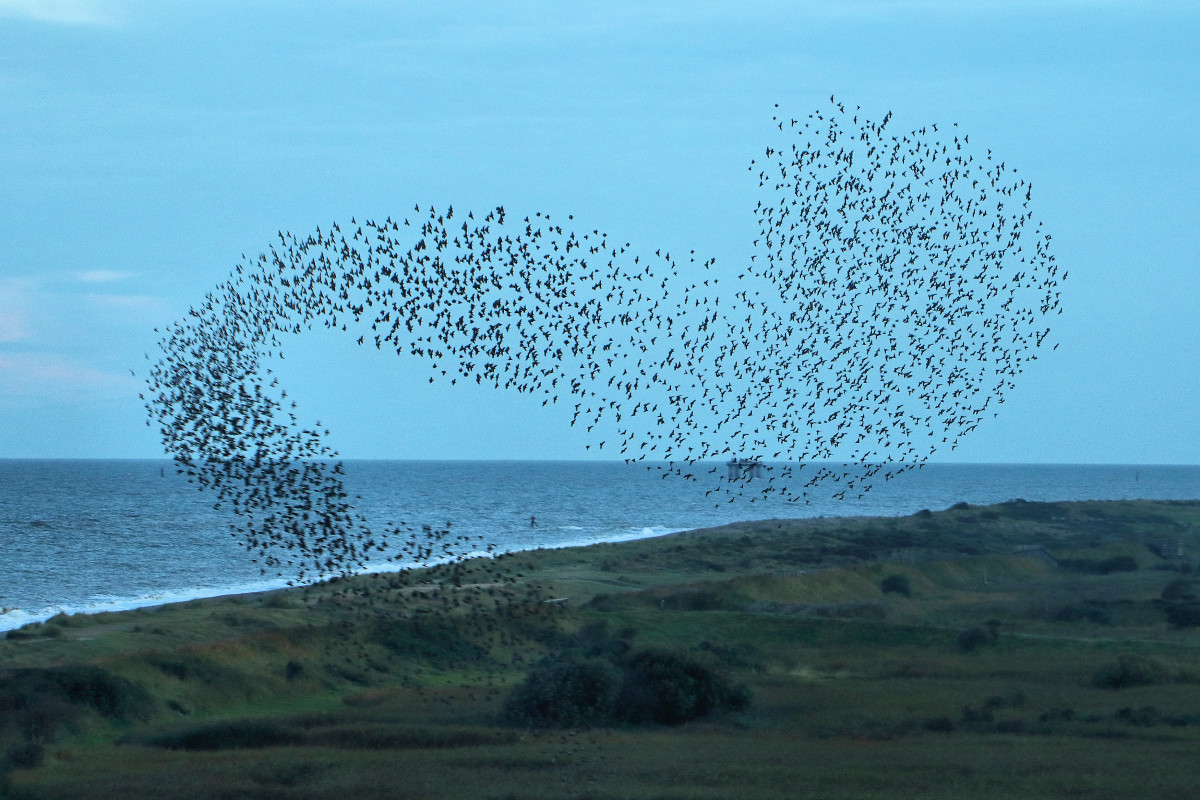 """A murmuration of starlings.  """"Quiet birds in circled flight""""  The metaphor is suggestive of joyfulness and freedom from earthly ties, emphasised by the use of the adjective """"uplifting"""""""