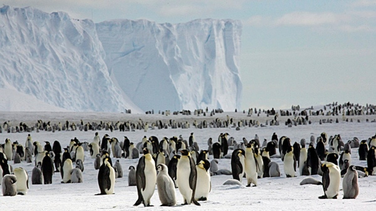 Penguins are frequently found along the outer edge of the Antarctica continent