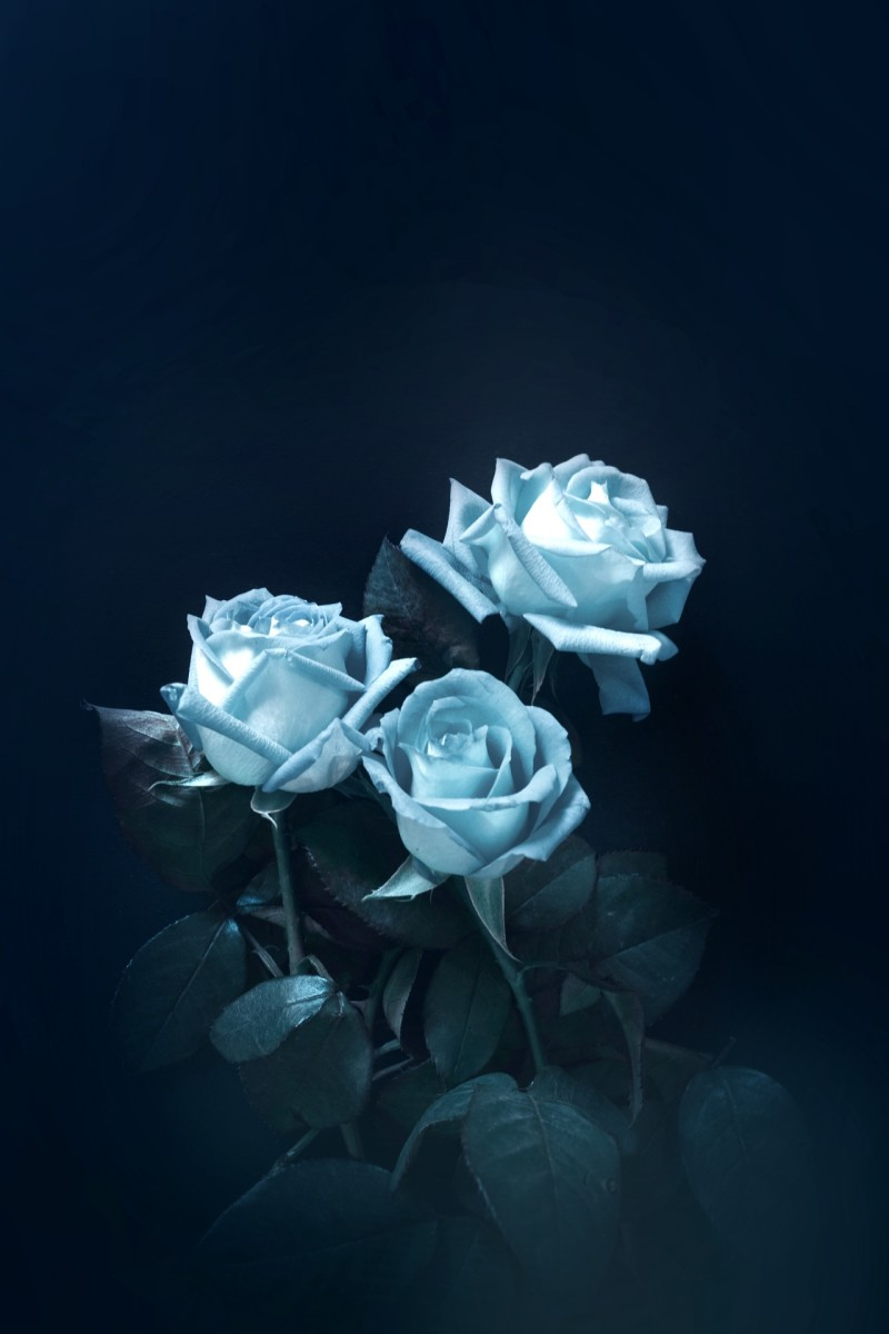The Blue rose represents the unreachable or unattainable.