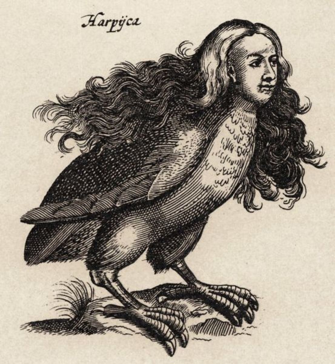 1660 Illustration of a Harpy by Matthius Merian
