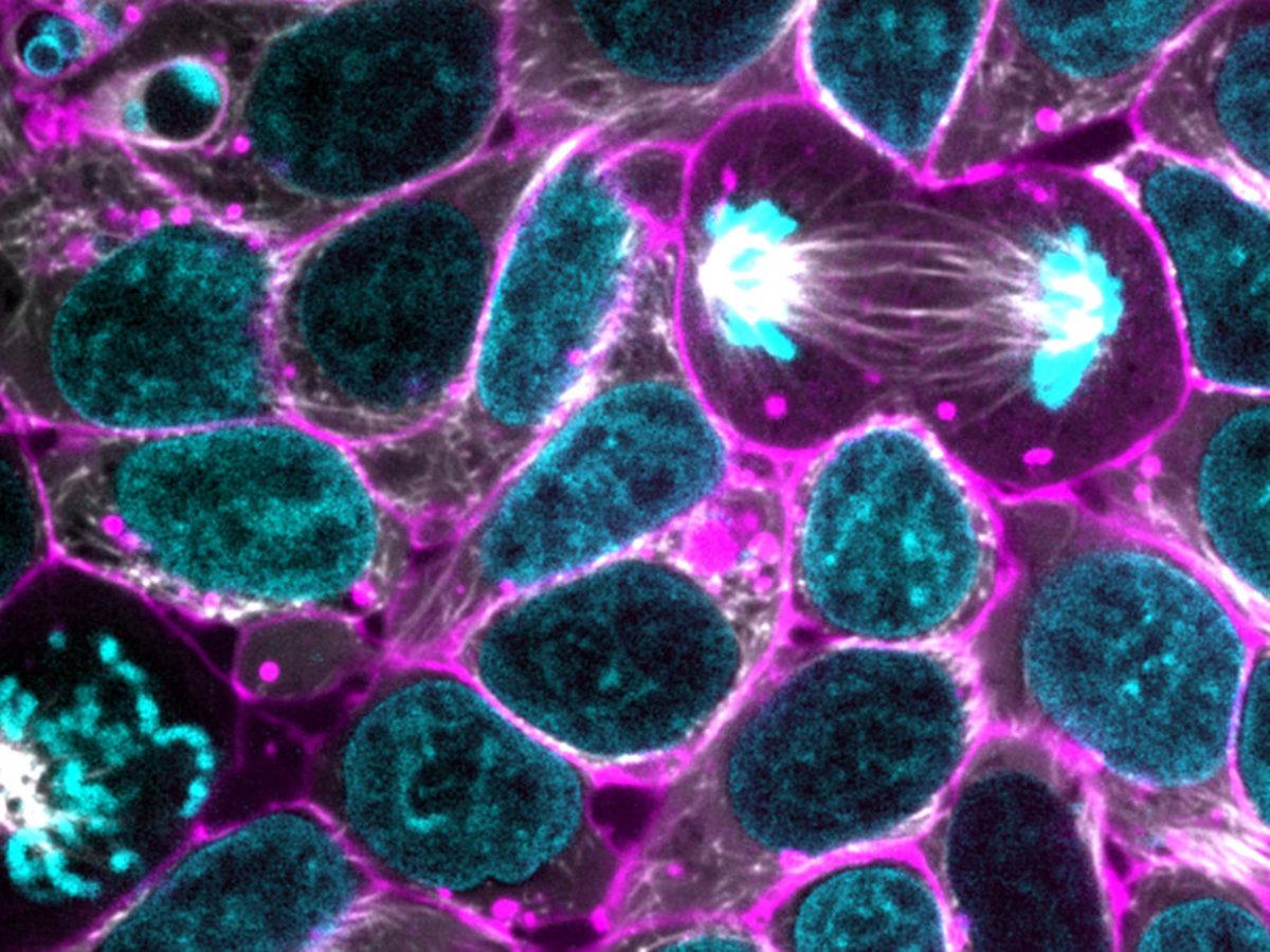 biology-basics-cells-genes