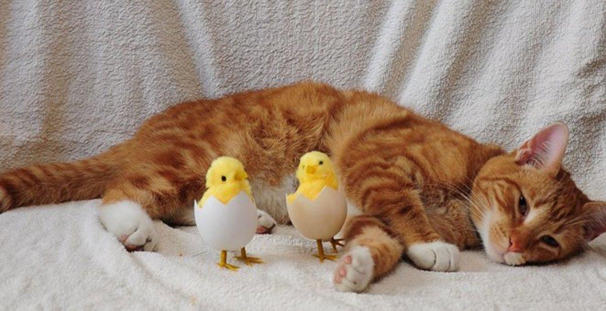 Walk Like A Cat On Eggs - Idiom