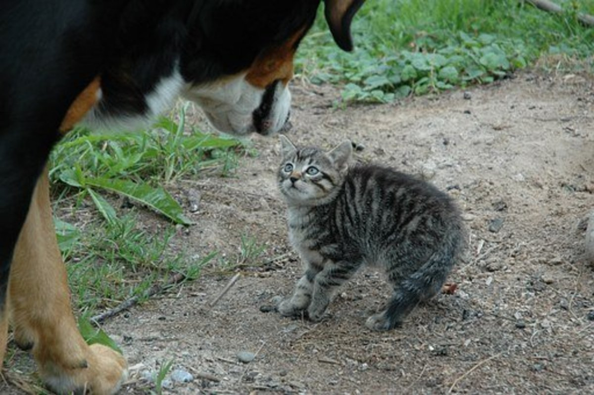 Fight Like Cat and Dog - Idiom