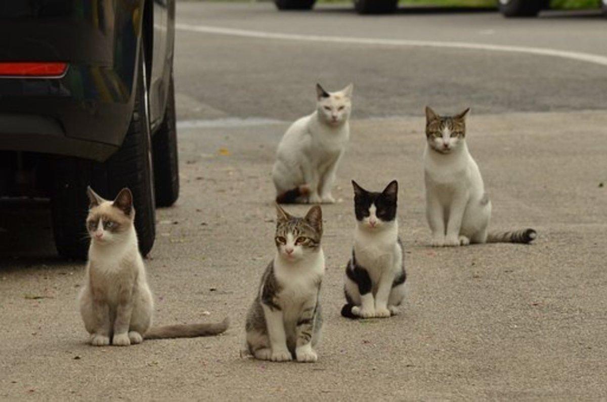 Alley Cat - Idiom