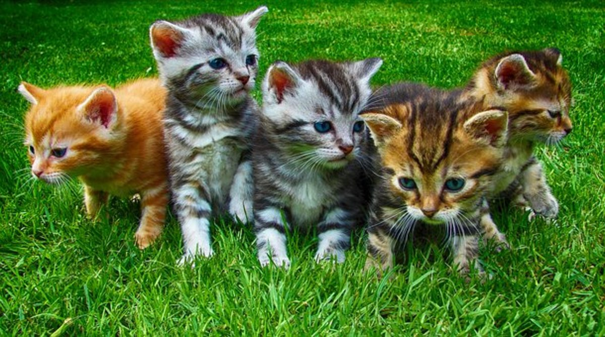 Keep No More Cats than can Catch Mice - Idiom